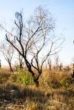 Árbol quemado del día de veranos fotos de archivo libres de regalías