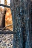 Árbol quemado después de un incendio forestal en Corfú Grecia Fotos de archivo