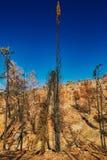 Árbol quemado medio tocando el cielo foto de archivo