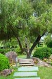 Árbol rameado con la rueda de carro Fotografía de archivo libre de regalías