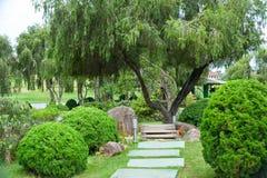 Árbol rameado del parque con la rueda de carro Imagen de archivo libre de regalías
