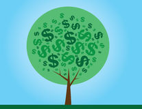 Verde del árbol del dinero Fotos de archivo