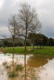 Árbol reflejado en la charca Foto de archivo
