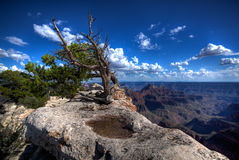 Árbol resistido en tapa de la montaña Fotografía de archivo