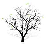 Árbol restablecido Foto de archivo libre de regalías