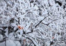 Árbol revestido de la nieve Imágenes de archivo libres de regalías