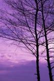 Árbol romántico del cielo Imágenes de archivo libres de regalías