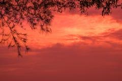 Árbol romántico del cielo Fotografía de archivo libre de regalías