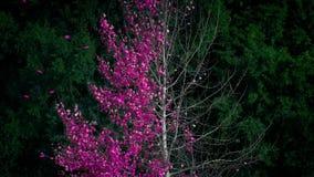 Árbol rosado abstracto de la hoja que vierte en viento metrajes