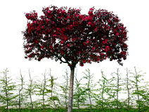Árbol rosado del beautifull Imagen de archivo