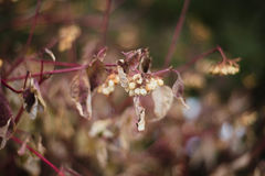 Árbol rosado del otoño Foto de archivo