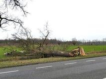 Árbol roto dañado por el viento de huracán después de la tormenta en el lado del camino Foto de archivo