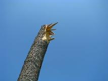 Árbol roto por el viento fotos de archivo