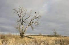 Árbol roto solo en el campo Foto de archivo libre de regalías