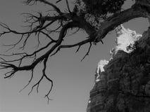 Árbol rugoso en el barranco Imágenes de archivo libres de regalías