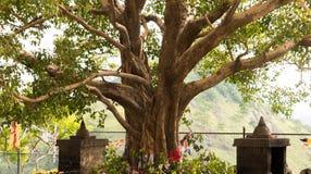 Árbol sagrado foto de archivo