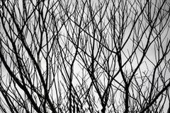 Árbol salvaje Foto de archivo libre de regalías