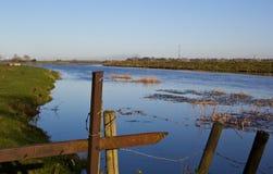 Árbol salvaje en las inundaciones Fotografía de archivo