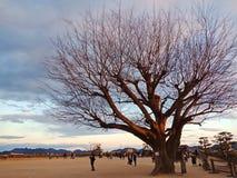 Árbol secado foto de archivo