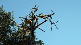 Árbol secado Fotografía de archivo