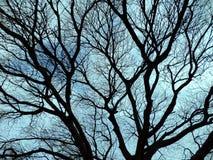 Árbol secado de las ramas imágenes de archivo libres de regalías