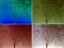 Árbol seco Imágenes de archivo libres de regalías