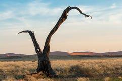 Árbol seco Foto de archivo libre de regalías