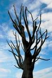Árbol seco Fotografía de archivo libre de regalías