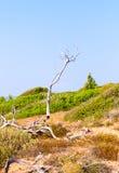 Árbol seco Imagen de archivo