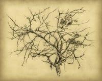 Árbol seco stock de ilustración