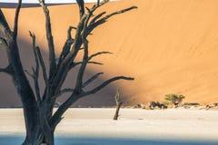 Árbol seco Imagen de archivo libre de regalías