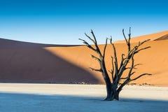 Árbol seco 1 Foto de archivo libre de regalías