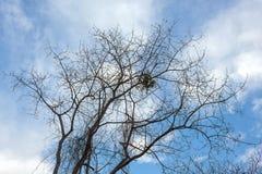 Árbol seco Imagenes de archivo