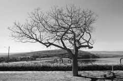 Árbol seco Fotos de archivo
