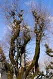 Árbol seco con las ramas fotografía de archivo