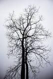 Árbol seco de la muerte Imagen de archivo