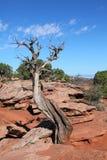 Plantas y árbol   Imagen de archivo libre de regalías