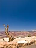 Árbol seco en barranca magnífica Imagen de archivo libre de regalías