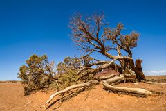 Árbol seco en desierto en el oeste del sur americano imagen de archivo