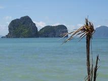 Árbol seco en el mar Imágenes de archivo libres de regalías