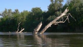 Árbol seco en el río, time lapse metrajes