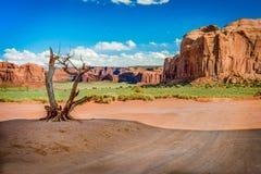 Árbol seco en el valle Fotografía de archivo libre de regalías