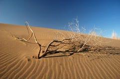 Árbol seco en la arena Foto de archivo