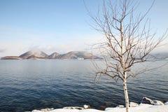 Árbol seco en nieve Fotos de archivo