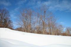 Árbol seco en nieve Fotos de archivo libres de regalías