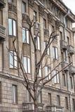 Árbol seco en un edificio urbano Foto de archivo libre de regalías