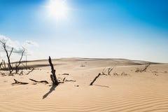 Árbol seco en una duna de arena Foto de archivo libre de regalías