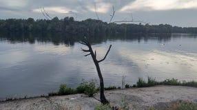 árbol seco por el río fotografía de archivo libre de regalías
