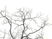 Árbol seco sin las hojas imagenes de archivo