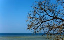 Árbol seco sobre la superficie del mar Foto de archivo libre de regalías